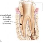 3. Site-Pentru Pacienți= Rubrica-Endodonția = SubDiviziunea - Tratamentul Propriu-Zis 2